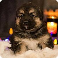 Adopt A Pet :: Harry - Saskatoon, SK