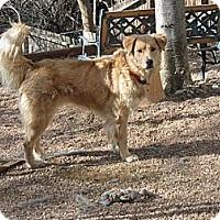 Adopt A Pet :: Remi - Denver, CO