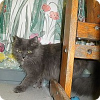 Adopt A Pet :: Zelda - Milwaukee, WI