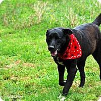 Adopt A Pet :: Charlie - Elizabeth City, NC