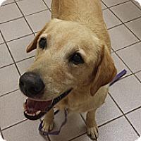 Adopt A Pet :: Gunner - Manchester, NH