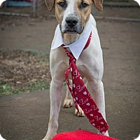 Adopt A Pet :: Highway - Staunton, VA