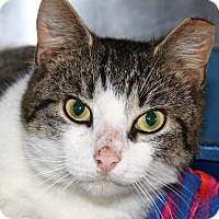 Adopt A Pet :: Bruce - North Branford, CT