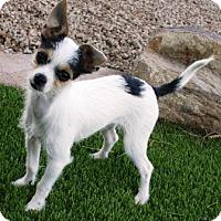 Adopt A Pet :: Orlie - Gilbert, AZ