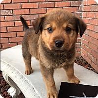 Adopt A Pet :: Ru - Hagerstown, MD