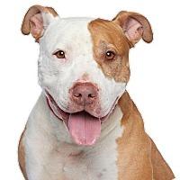 Adopt A Pet :: Marcee - Los Angeles, CA