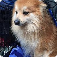 Adopt A Pet :: Utley - Oak Ridge, NJ