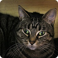 Adopt A Pet :: Ruby - Martinsville, IN