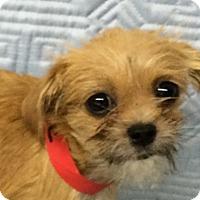 Adopt A Pet :: Bonnie - Jasper, TN
