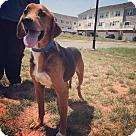 Adopt A Pet :: Smiley