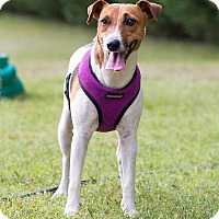 Adopt A Pet :: Molly - Conyers, GA