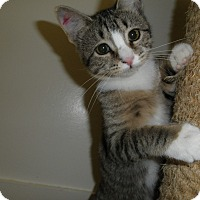 Adopt A Pet :: Sienna - Milwaukee, WI