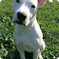 Adopt A Pet :: Baxter - Mayer, MN