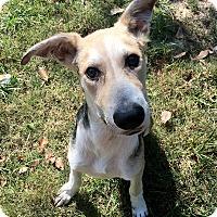Adopt A Pet :: Monty - Boston, MA