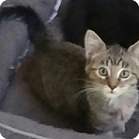 Adopt A Pet :: Mcgyver - North Highlands, CA