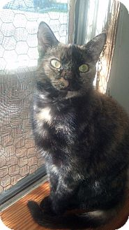Calico Cat for adoption in Port Richey, Florida - Callie