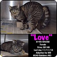 Adopt A Pet :: Love - Salisbury, NC