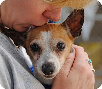 Chihuahua Mix Dog for adoption in Philadelphia, Pennsylvania - Papito