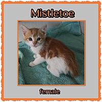 Adopt A Pet :: Mistletoe - Richmond, CA