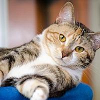 Adopt A Pet :: Ingrid 13748 - Atlanta, GA
