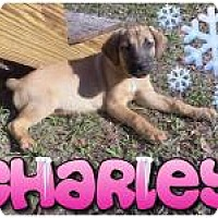 Adopt A Pet :: Charley - Marlton, NJ