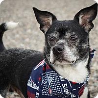 Adopt A Pet :: Solomon - Holliston, MA