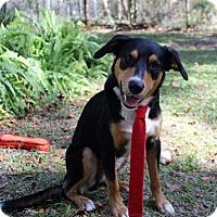 Adopt A Pet :: Huey - Ocala, FL