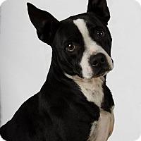 Adopt A Pet :: Roxanna - New Oxford, PA