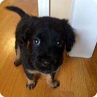 Adopt A Pet :: Beatrice - Bernardston, MA