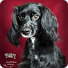Adopt A Pet :: Billy