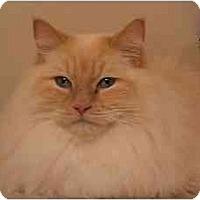 Adopt A Pet :: Albert - Keizer, OR