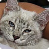 Adopt A Pet :: Meadow - Santa Monica, CA