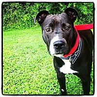 Adopt A Pet :: Cali - Louisville, KY