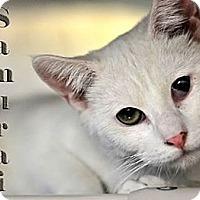 Adopt A Pet :: Sammy - Pittstown, NJ