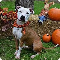 Adopt A Pet :: Rainbow - Burleson, TX