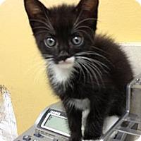 Adopt A Pet :: Tasha - Miami, FL