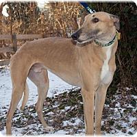 Adopt A Pet :: Bermuda - Harrisburg, PA