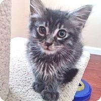 Adopt A Pet :: Clair - Davis, CA