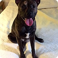 Adopt A Pet :: YARA - CHICAGO, IL