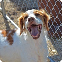 Adopt A Pet :: Harley - Meridian, ID