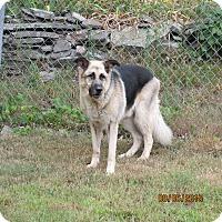 Adopt A Pet :: Niko - Wapwallopen, PA