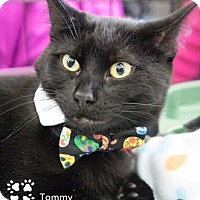 Adopt A Pet :: Tommy - Merrifield, VA
