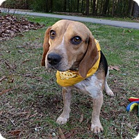 Adopt A Pet :: Clark - Mocksville, NC
