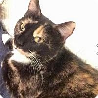 Adopt A Pet :: Polly Pocket - Flowery Branch, GA