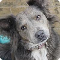 Adopt A Pet :: Ripley - Lebanon, CT