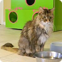 Adopt A Pet :: Misty - Jupiter, FL
