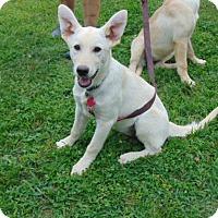 Adopt A Pet :: Bronwynn - Portland, ME