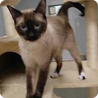 Adopt A Pet :: Hiroshi - Titusville, FL