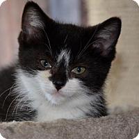 Adopt A Pet :: Nemo - Richmond Hill, ON