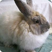 Adopt A Pet :: Aramis - Harrisburg, PA